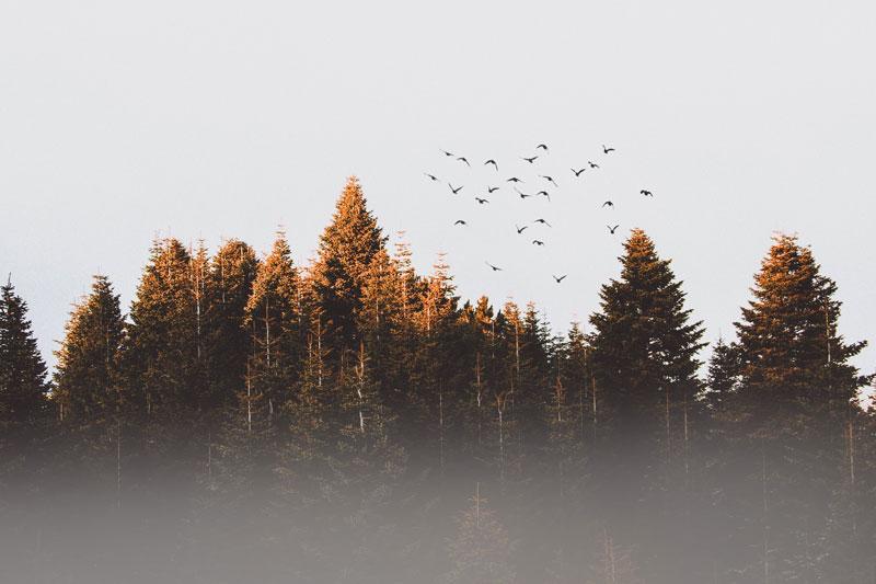les woodcut